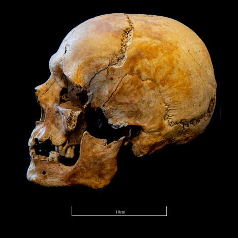 Skull 5723SJ - 7044.jpg