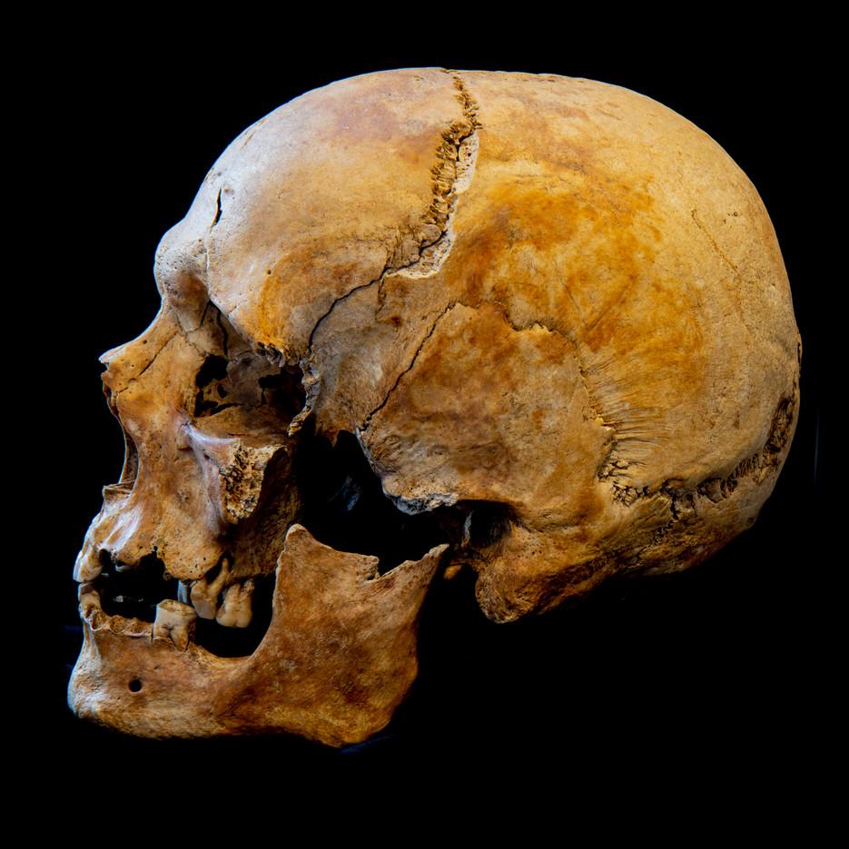 C12-16 Male skull 5723SJ side.jpg