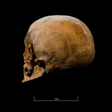 Skull 653SJ - 6245.jpg