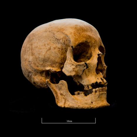 Skull 653SJ - 6255.jpg