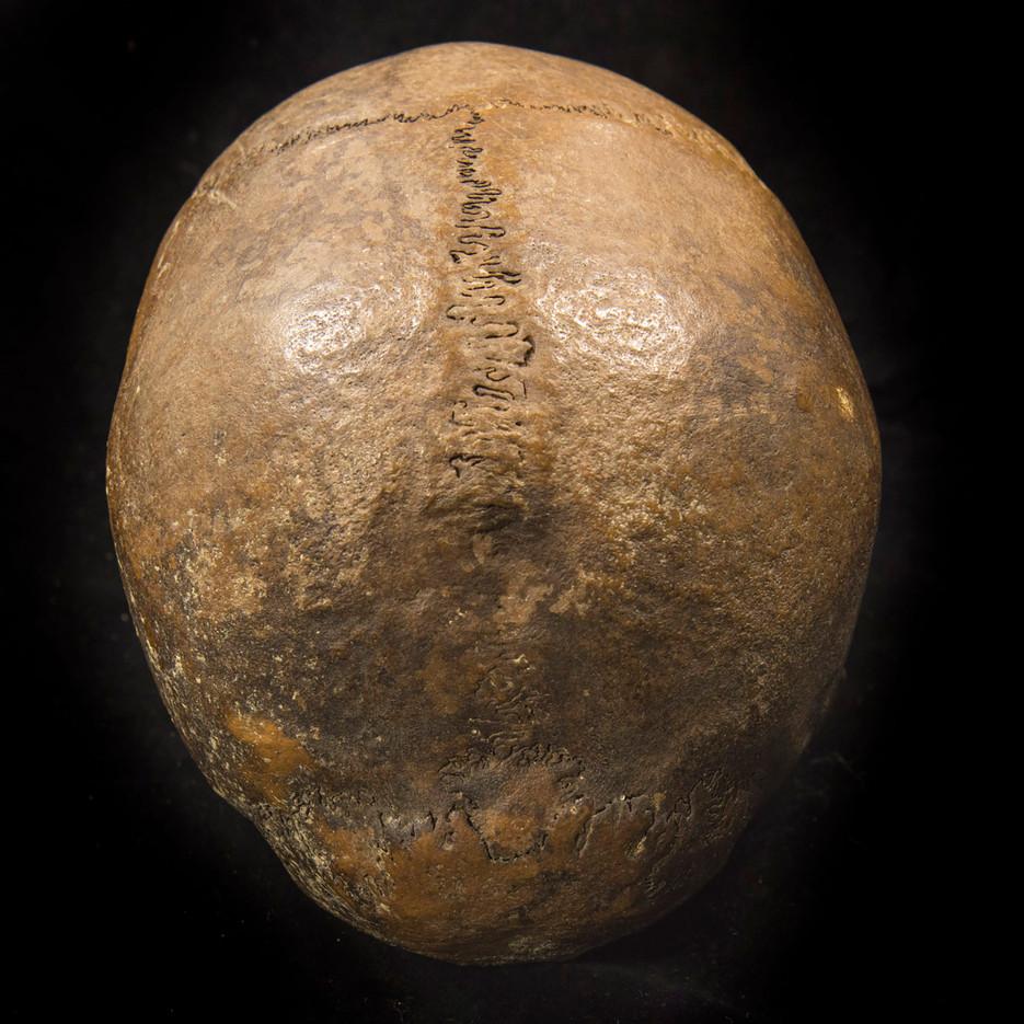 C2-4 Male skull R2405CD top.jpg