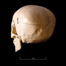 Skull BB08 - 9191.jpg