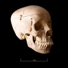 Skull BB08 - 9196.jpg
