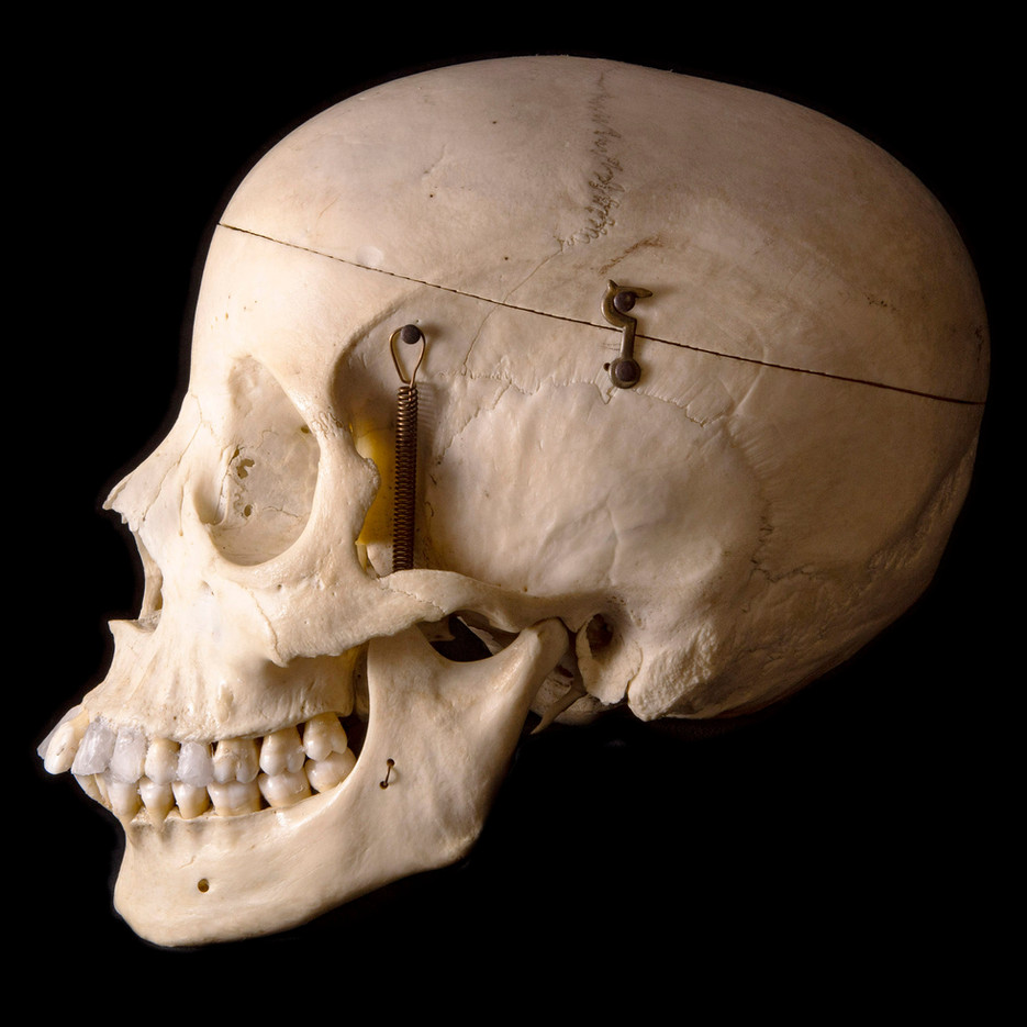 Anatomy skull female BB08 side.jpg