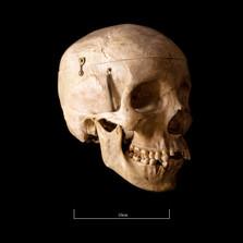 Skull FR30 - 9143.jpg