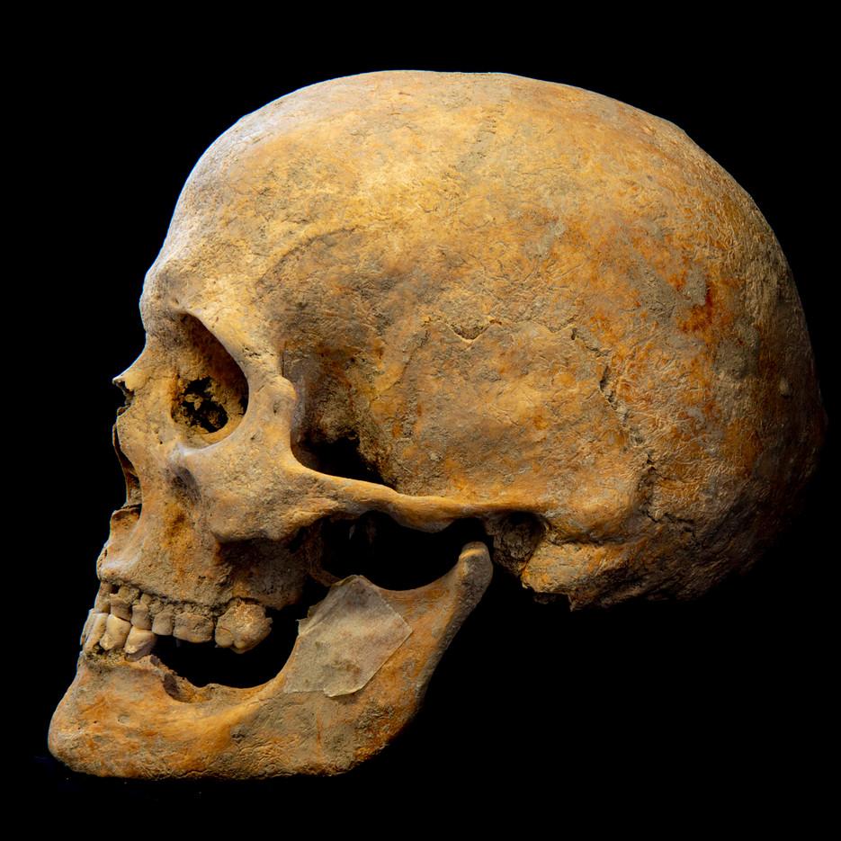 C10-12 Male skull 8533CH side.jpg