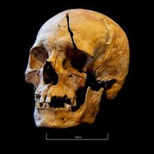 Skull 5723SJ - 7042.jpg