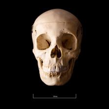 Skull BB08 - 9198.jpg
