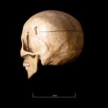 Skull FR30 - 9138.jpg
