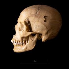 Skull B3R7 - 9155.jpg