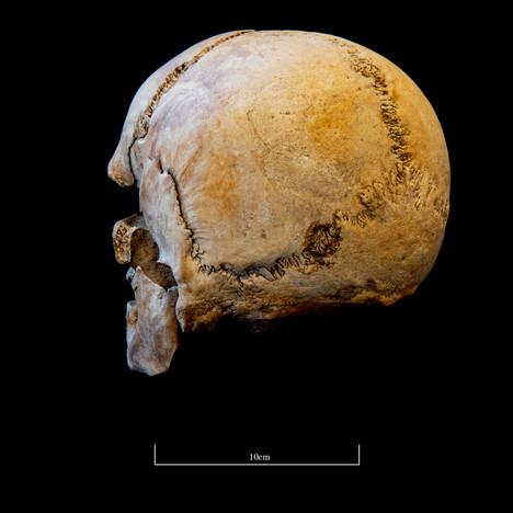 Skull 5723SJ - 7046.jpg