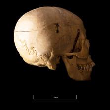 Skull B3R7 - 9160.jpg