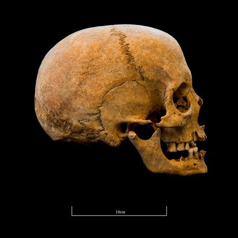 Skull A044EH - 6311.jpg
