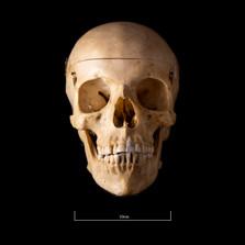 Skull NC1K - 9217.jpg