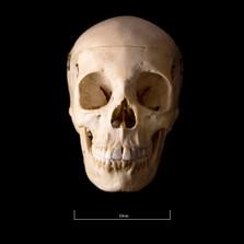 Skull BB08 - 9186.jpg