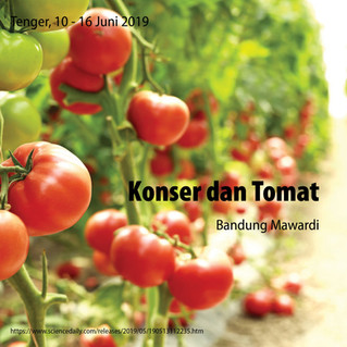 Konser dan Tomat