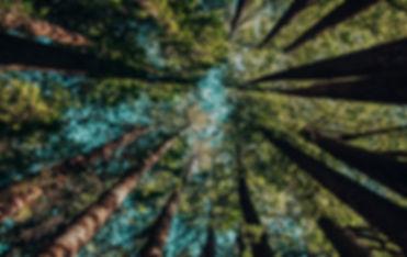 Looking%20up_edited.jpg