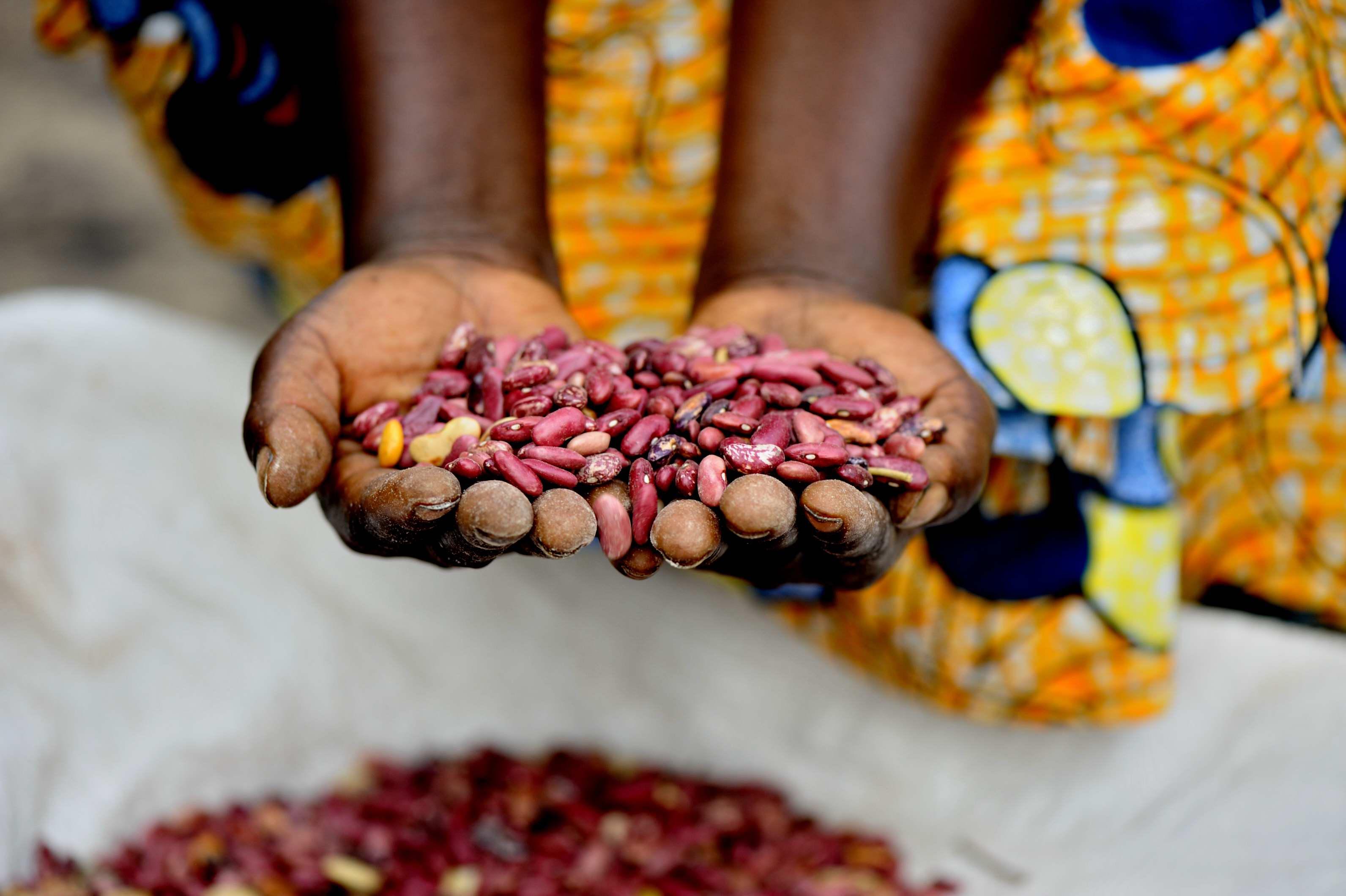 Masika's seeds
