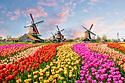 オランダ風車小さめ.png