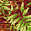 hothouse palm tropical foliage repeat print pattern for fashion textiles red and lime green