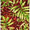 hothouse palm tropical foliage repeat print pattern for fashion textiles