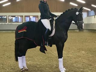 Titolas besteht die 2. Sportprüfung für 5 J. gekörte Hengste in Münster