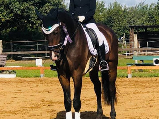 🥈🏆Ehemalige Verkaufspferde Info: 2. Platz Dressurpferde A 🥈🏆