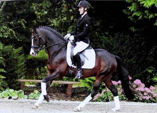 FEI Ponny Wallach - 7 J. - 146cm - L Platziert / A Gewonnen /FEI Lektionen