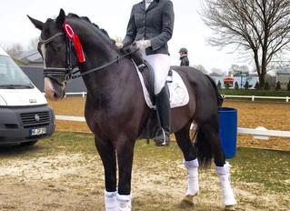 Titolas wird 5. beim Behrendorfer Dressurfestival in der Dressurpferde L