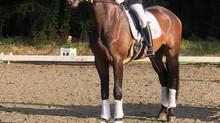 🥇🏆Ehemalige Verkaufspferde Info: SIEG in Dressurpferde A🏆🥇