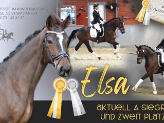 🥇🏆Aktuelle Verkaufspferde Info: SIEG und 2. Platz in A Dressuren🏆🥇