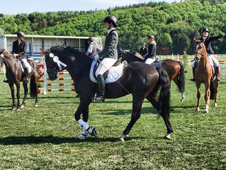 3. Platz in der Reitpferdeprüfung in Dingerdonn