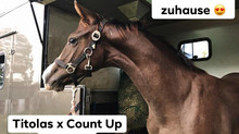 🏆 Elite Hengstfohlen von Titolas x Count Up🏆
