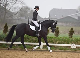 Titolas wird 3. in der Dressurpferde L in Selsingen
