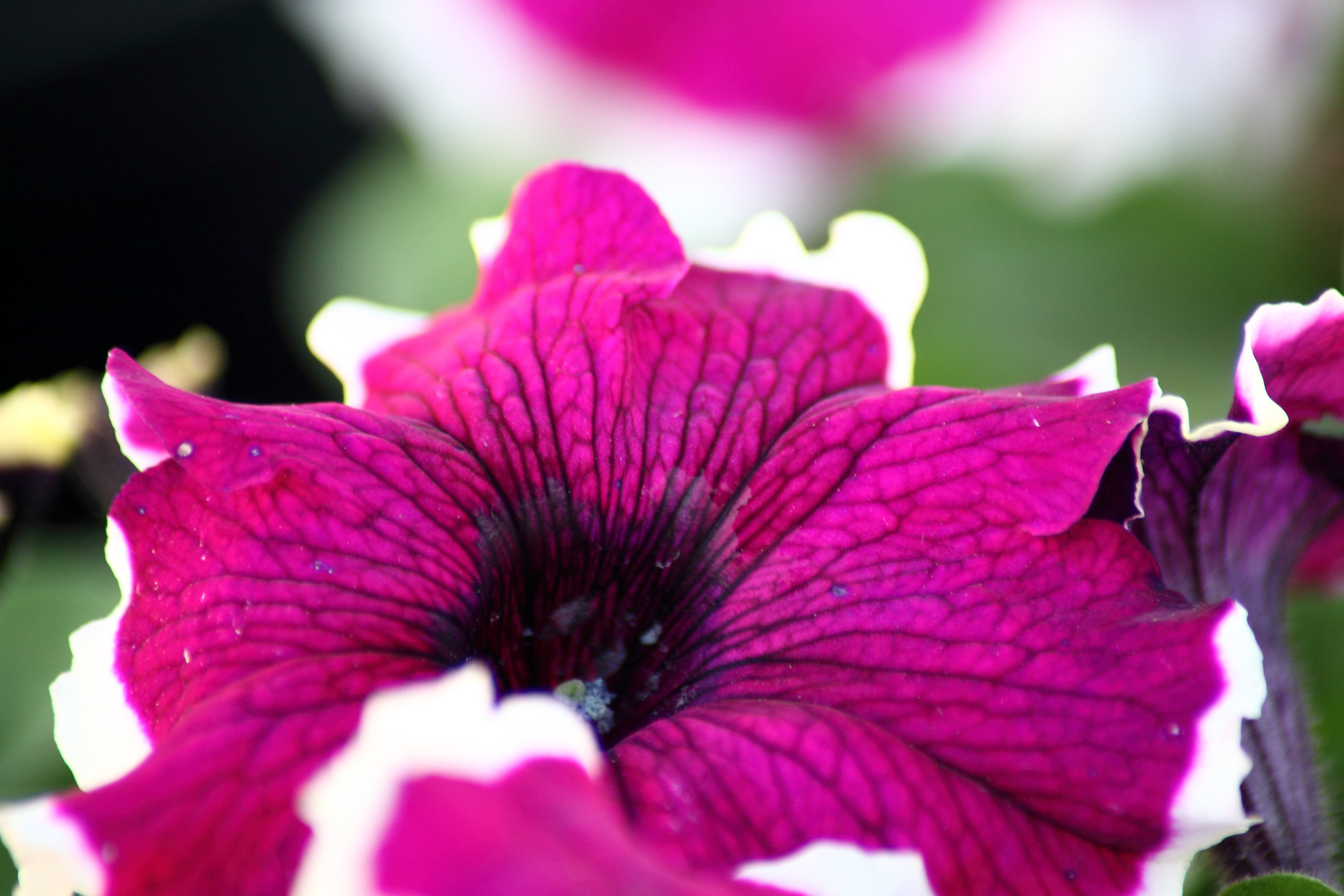 Fresh Bedding Plants In The Spring
