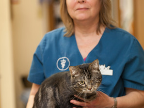 Amy- Veterinary Assistant