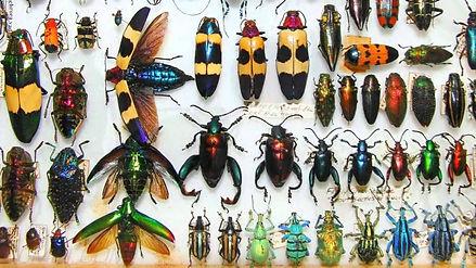beetles7.jpg