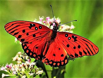 butterfly 8.jpg