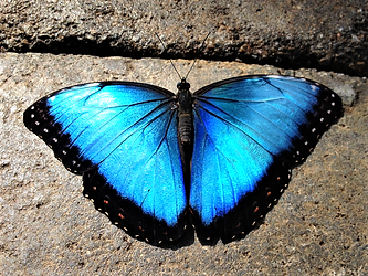 butterfly 7.png