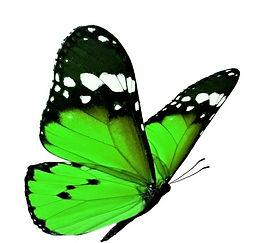 butterfly 9.jpeg