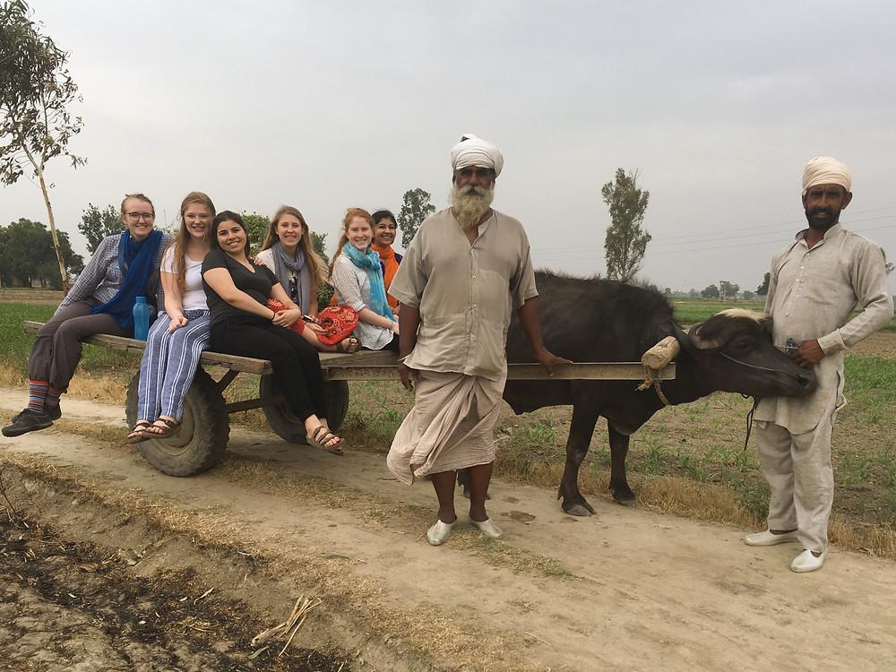 We took a nice Ox cart ride