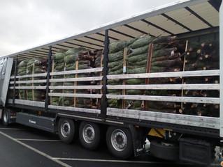 Auch dieses Jahr verteilen wir über 2400 Tonnen Weihnachtsbäume in ganz Europa