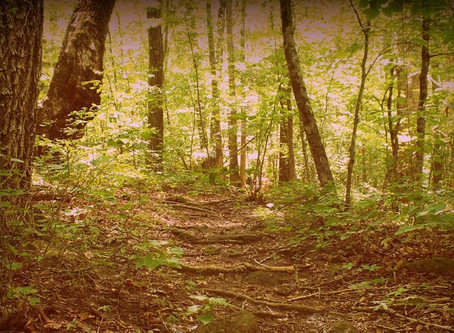 Forest Therapy Walk & Inspired Art Making