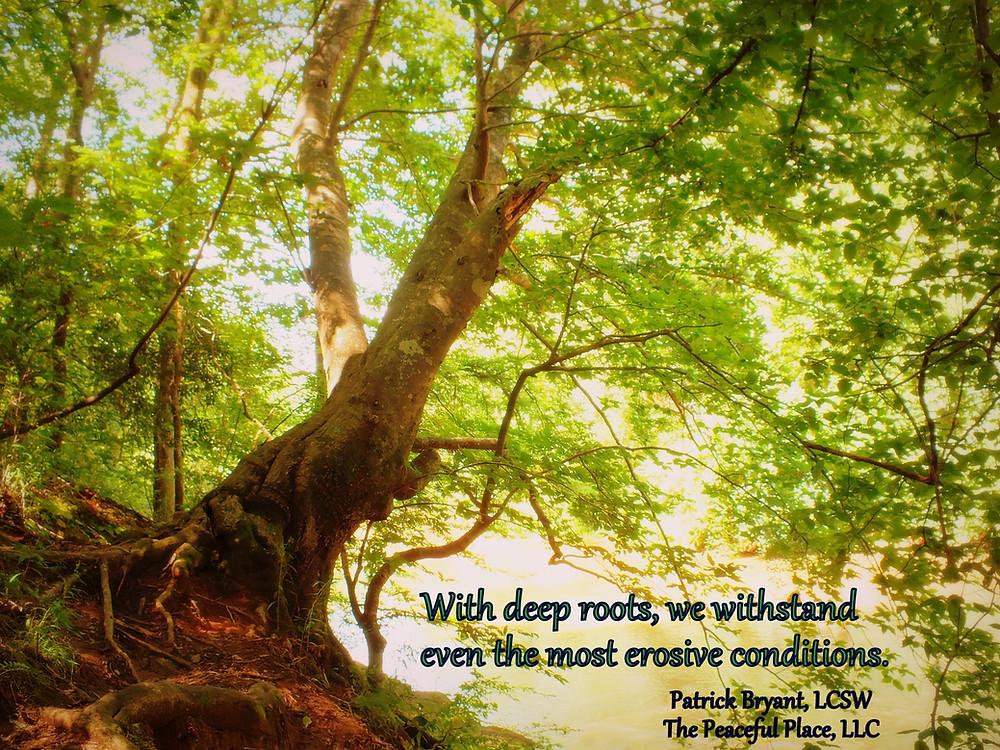 Roots quote.signature.jpg