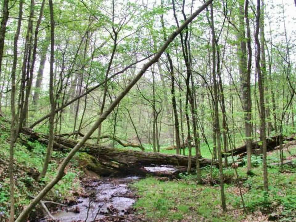 Dysart Woods Walking Trail