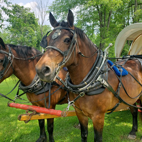 Celebrate Treasures, Travel, and Trails June 2-6 in Belmont County