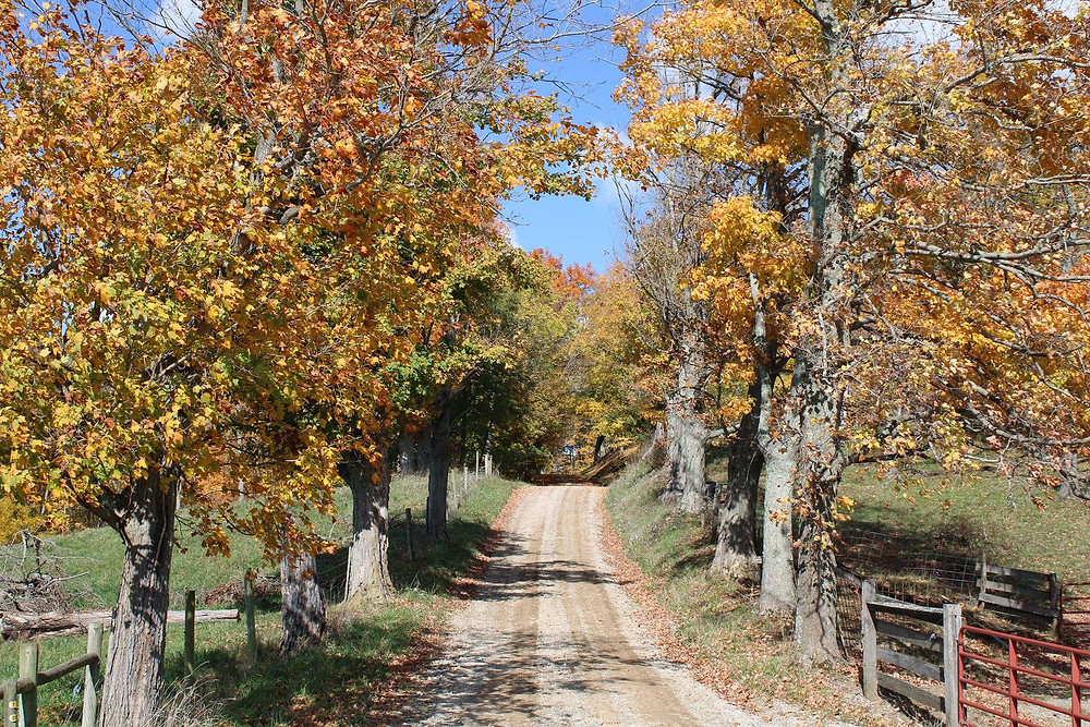 Drover's Trail