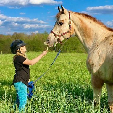 Penn-Walt Equestrian