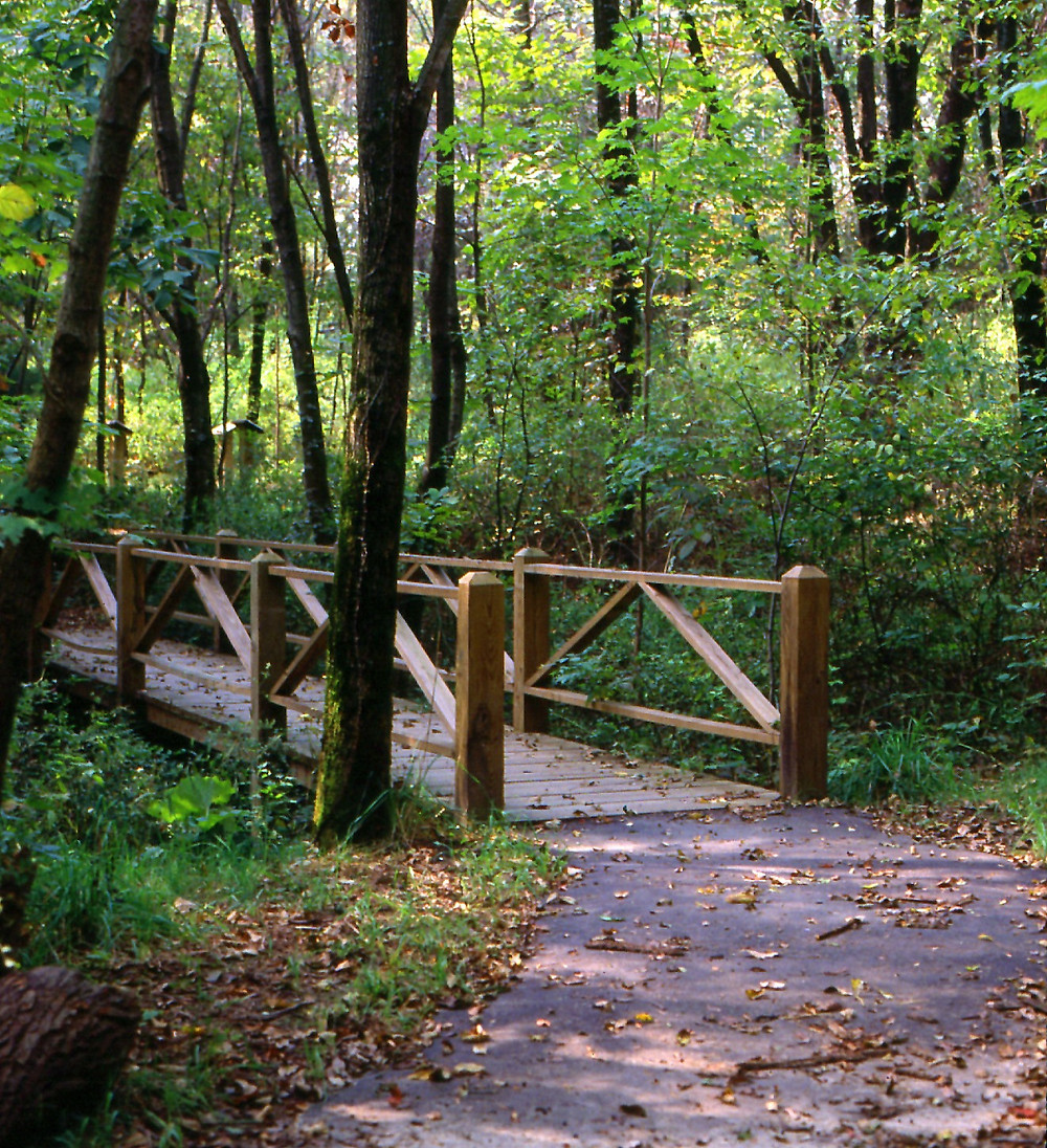 Trail at Barkcamp State Park