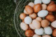 Farm fresh, freshly picked eggs in a bas